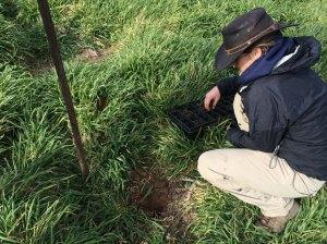 Charlotte grass planting