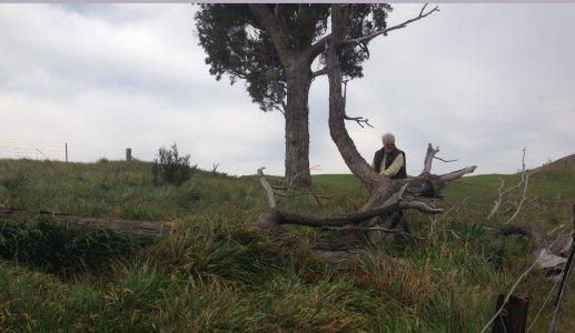 small plantation dead tree