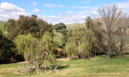 Willows at Oakey creek crossing