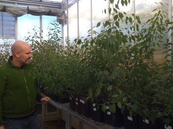 Jason and trees in hothouse