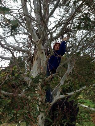 Leonie in tree
