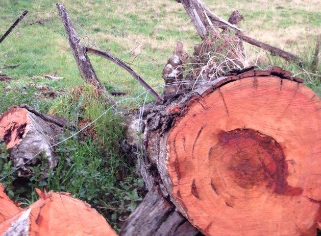 fallen fence 3