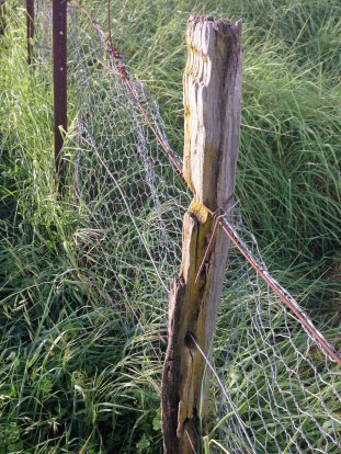fence line 3