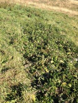 lines of weeds