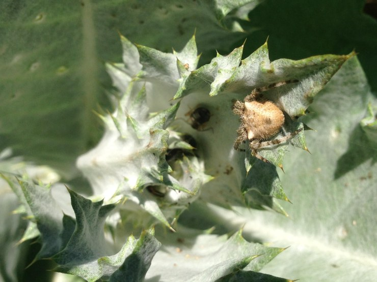 spider and earwigs