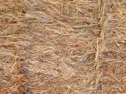 hay closeup