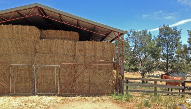 hayshed full with pony