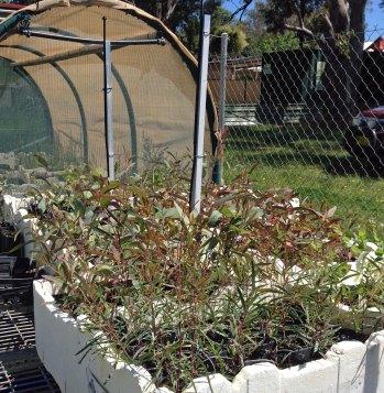Some of last year's seedlings