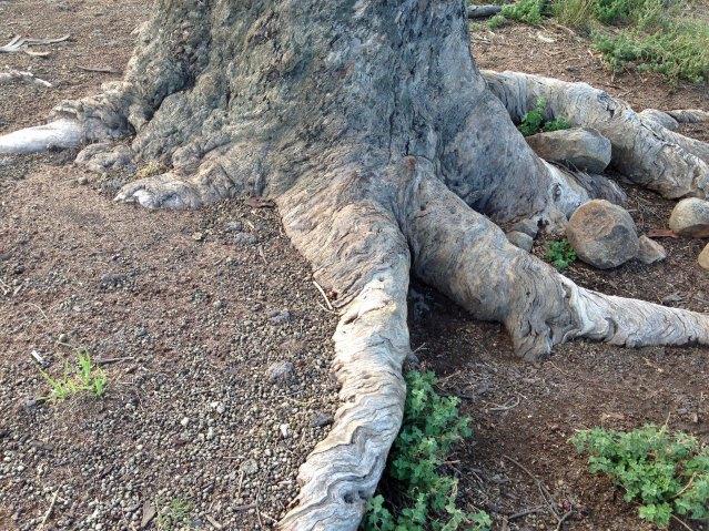 lucerne paddock top tree around trunk