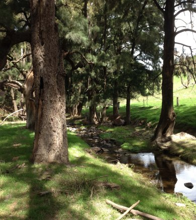 Oakey Creek Jan 2015