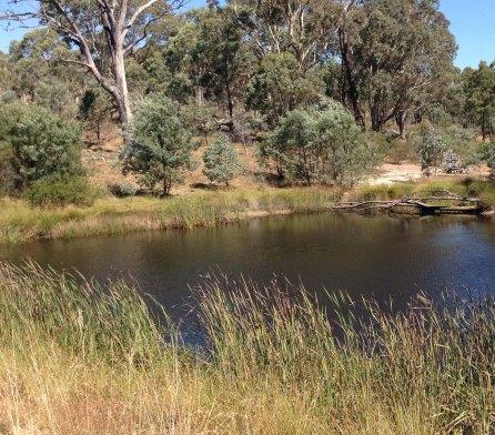 Gang Gang dam with vegetation 2