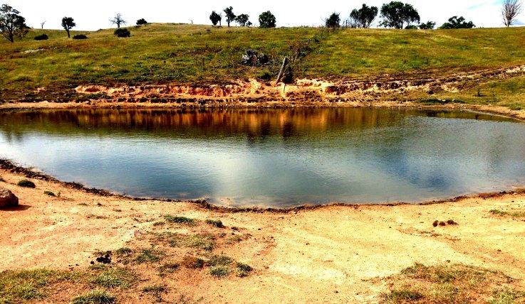 Hayshed gully dam 2