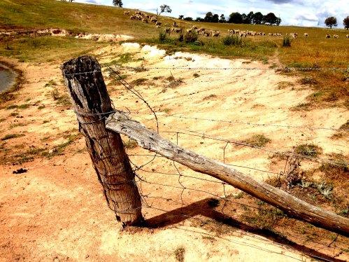 Hayshed gully dam 3