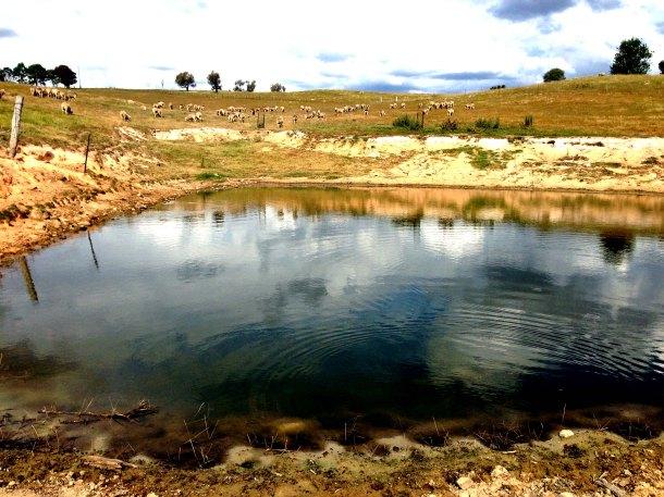 Hayshed gully dam