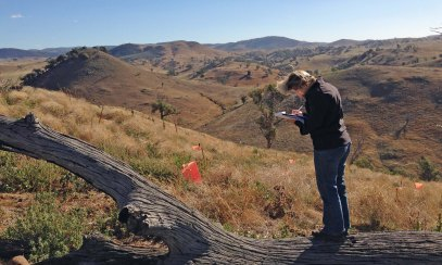 Lesley Peden recording vegetation Box gum ridge