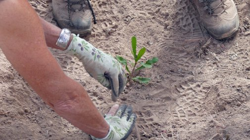 Closeup banksia planting photo by Martin Neudert