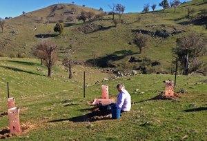Georgia planting 2013 cattleyard area