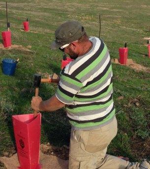 Andrew Henjak hammering stakes Adnamira dam plantation