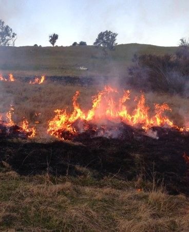 burning in WOPR paddock2
