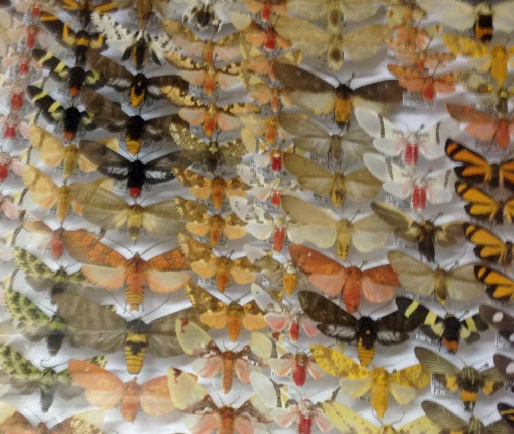 Armies of moths Serra Bonita Vitor Beckers Collection