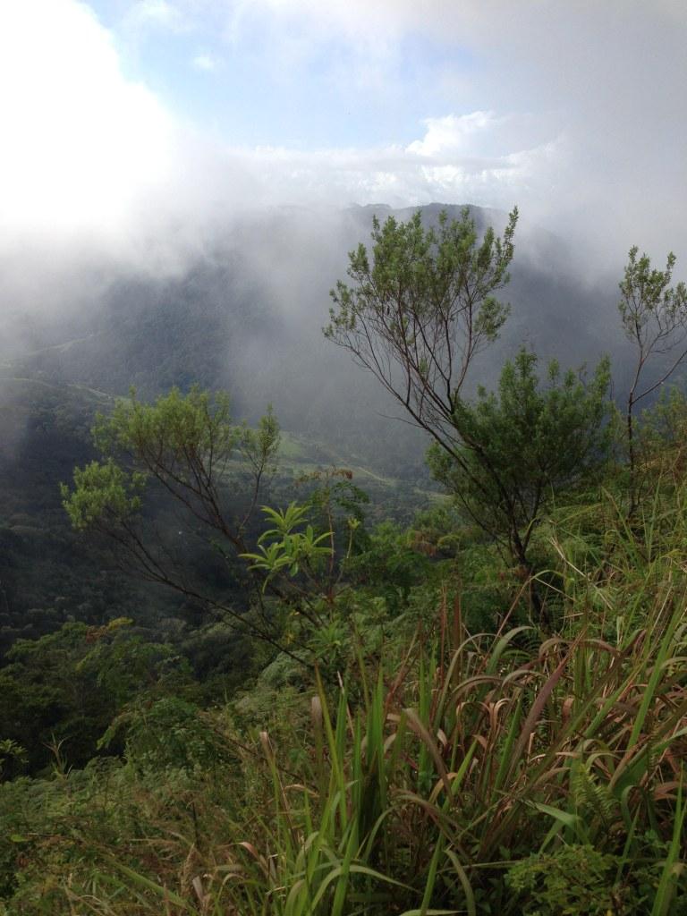 Cloud forest Serra Bonita