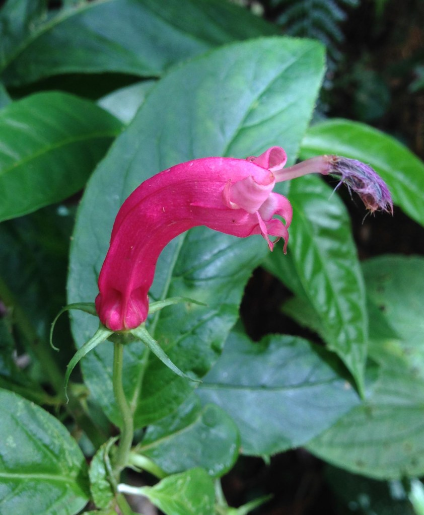 Flower Serra Bonita