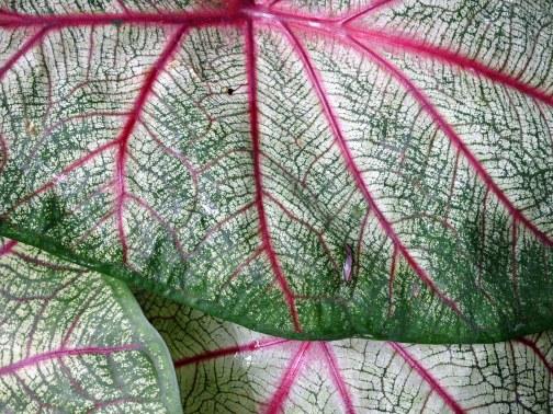 leaves Serra Bonita