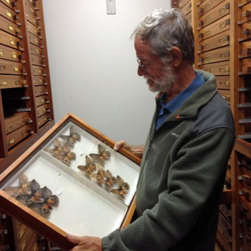 Vitor Becker with moth collection