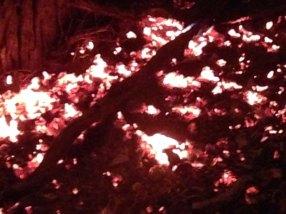 coals at foot of burning tree