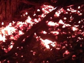 coals at foot of burning tree