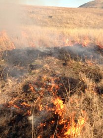 burning in WOPR paddock