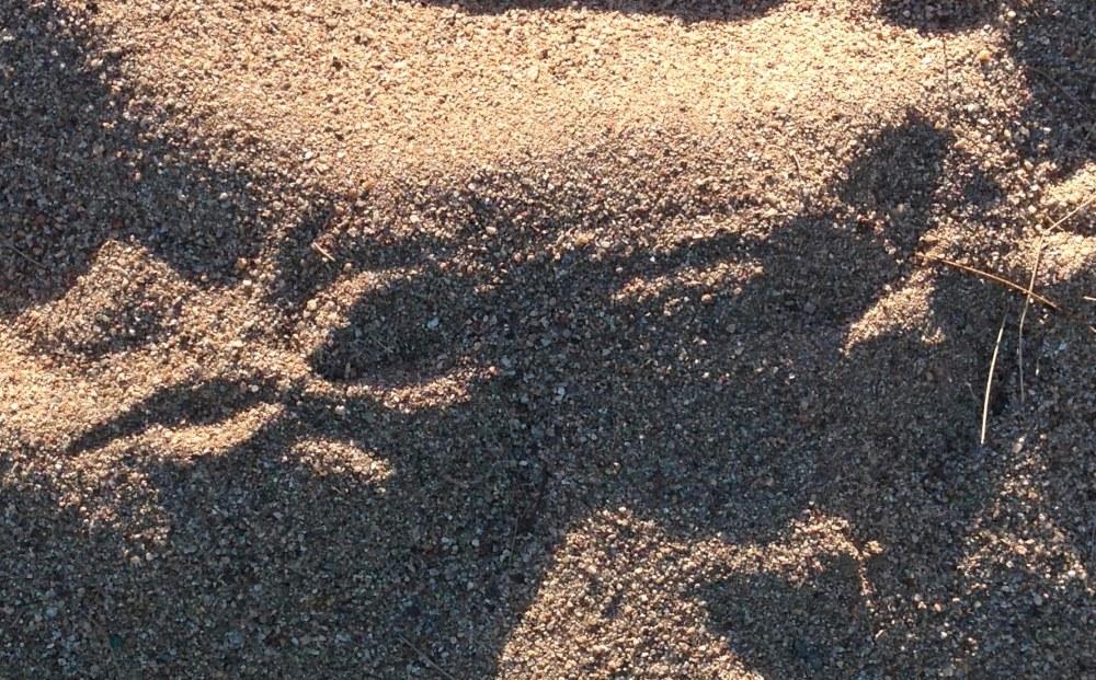 Pelican footprints