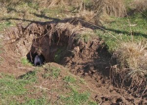 Copper wombat hole 3