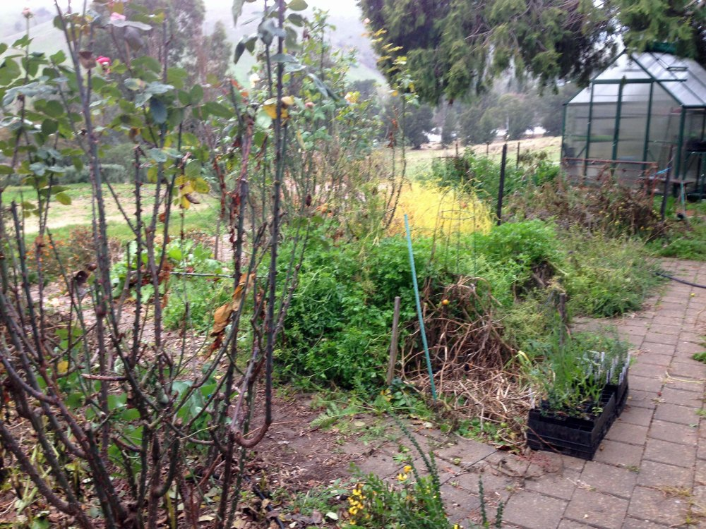 Vege garden after frost