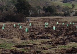planting across burned areas