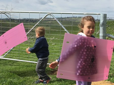 pink covers as kites