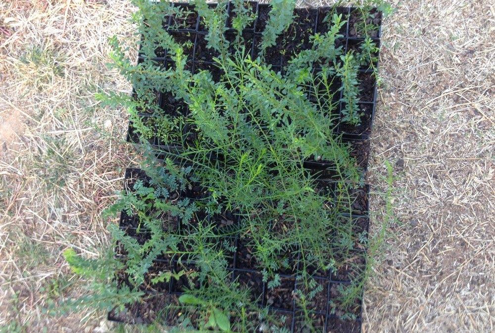 seedlings-for-2016