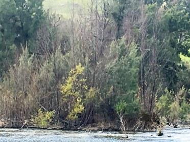 survivor in big thicket