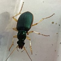 beetle 4 green