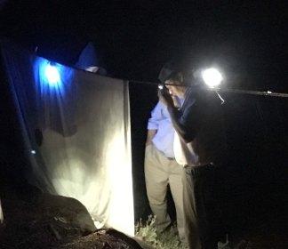 beetle scanning at night