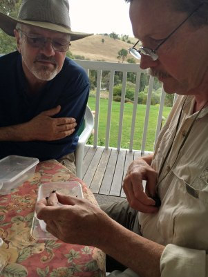 Craig and Kip identifying beetles.jpg