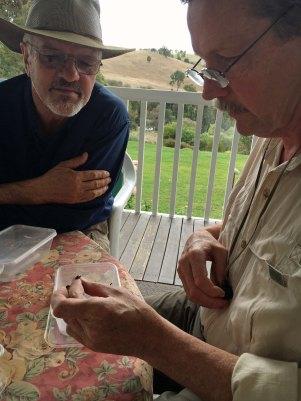 Craig and Kip identifying beetles.jpg