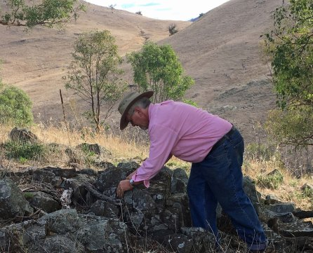 Craig beetle hunting