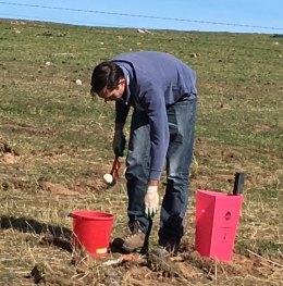 Jimmy planting