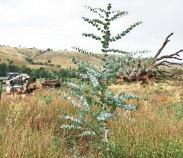 2015 planting