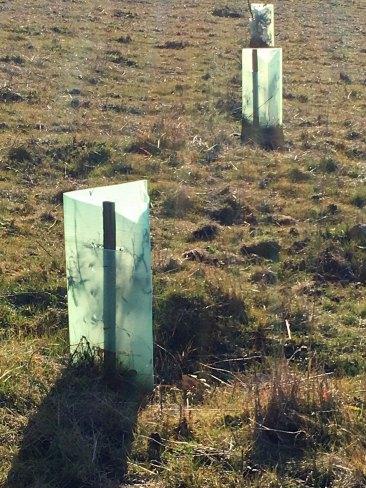 alien ice-blocks