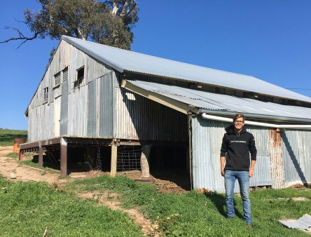 emil and woolshed