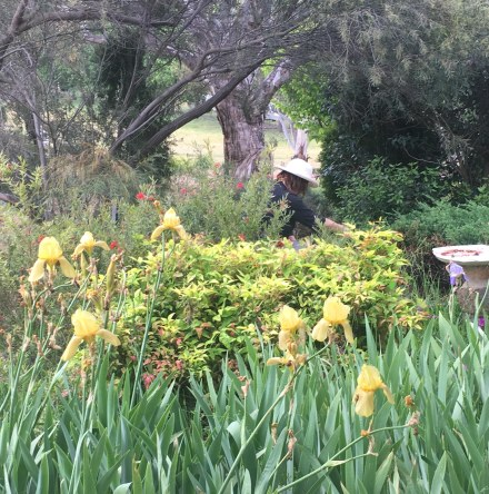 Robyn among the yellow irises