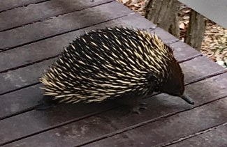 echidna at house 2018