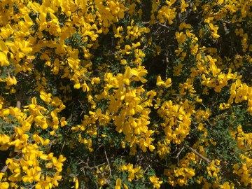 Sicily roadside wildflowers 2